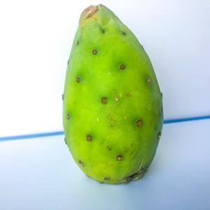 Fruit: Tuna (Opuntia ficus-indica)