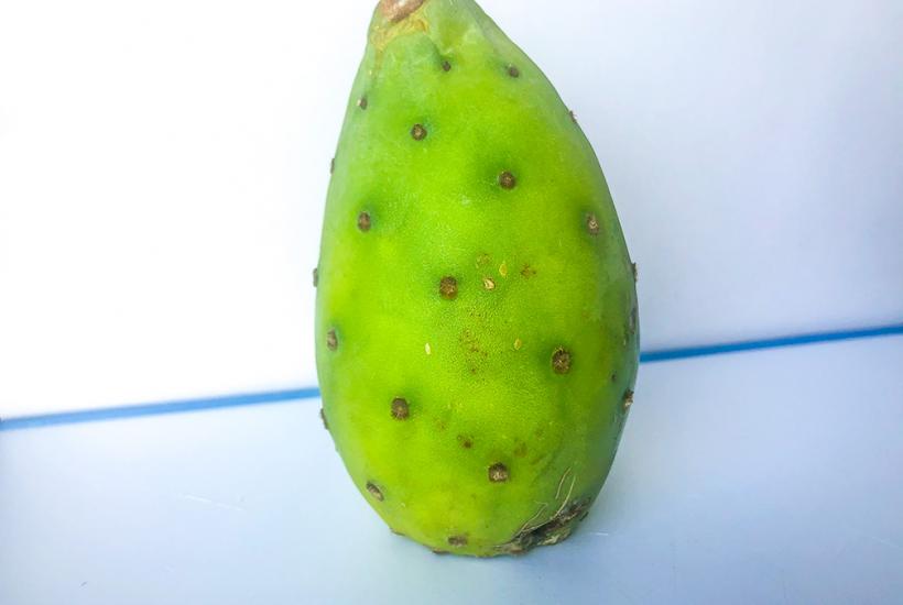 Fruto: Tuna (Opuntia ficus-indica)